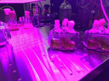 Marvellous light for algae
